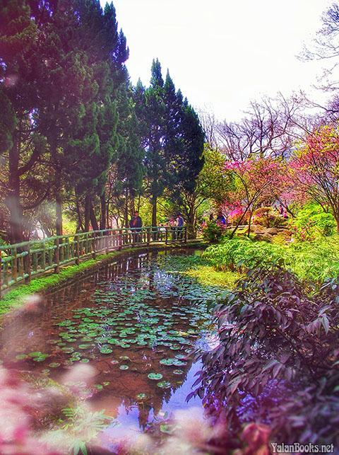 Travel Taiwan Spring Landscape Photography Romanticism 台北旅行 春色花卉 风光摄影 浪漫主义 Yalan雅岚 黑摄会